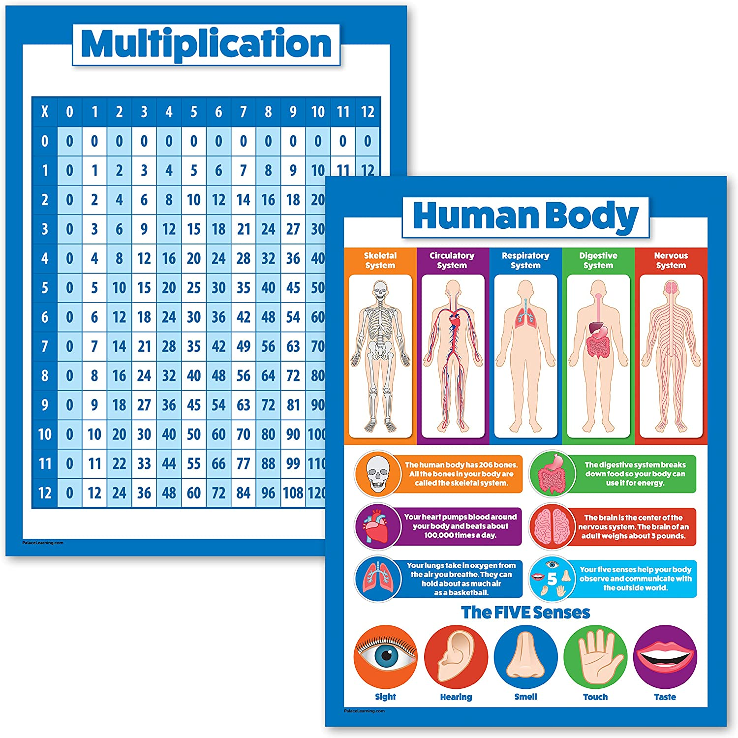 2 Pack - Multiplication Table Poster & Understanding The Human Body Chart for Kids (Laminated, 18 x 24)