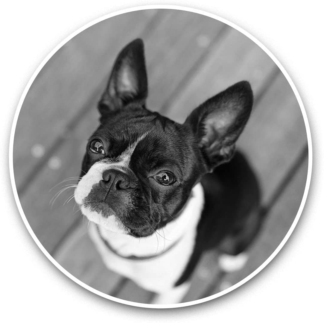 Awesome Vinyl Stickers (Set of 2) 7.5cm (bw) - Cute Boston Terrier Dog Puppy Fun Decals for Laptops,Tablets,Luggage,Scrap Booking,Fridges,Cool Gift #37536