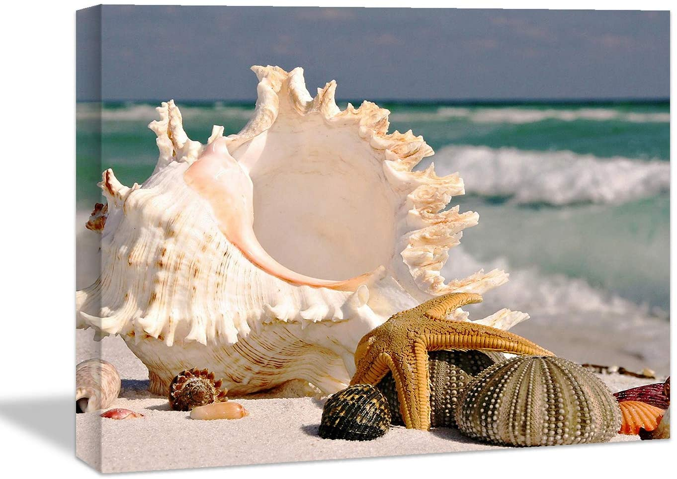 Looife Ocean Theme Canvas Wall Art, 24x16 Inch Conch Seashell on Beach Picture Prints Wall Decor, Nature Scenery Painting Wall Deco Ready to Hang