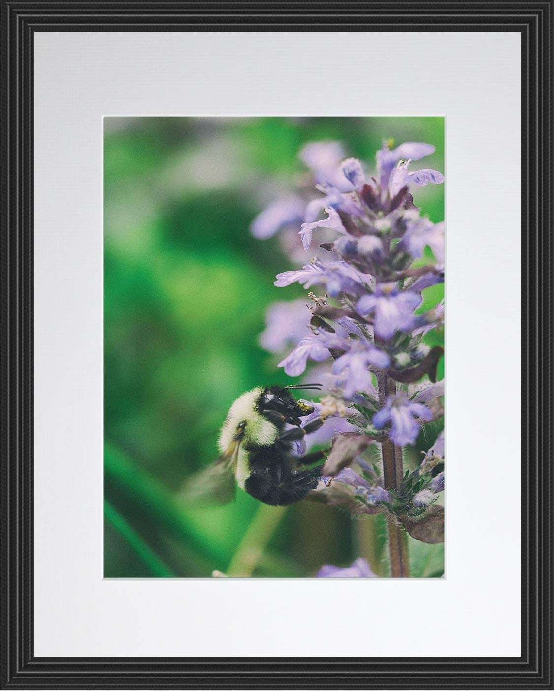 The Lavender Flower and The Bee Beautiful Scenery Poster Framed Photo Picture Print Home Room Decor Garden Nature Wall Art - Flowers Floral Collection (11x14 Framed)