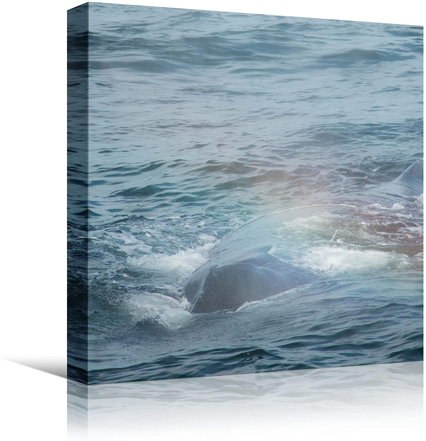 bestdeal depot Fish on The Surface VI Bedroom Dolphin Marine Life Multicolor Nautical Photography Wall Art Prints for Living Room,Bedroom Ready to Hang - 16x16 inches