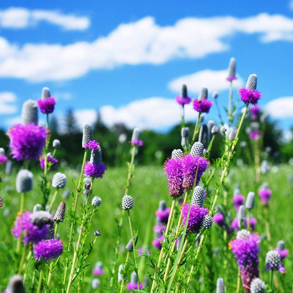 Fields Flowers Plants Nature Earth Life Countryside Sky Clouds Green Blue (N002077) Poster Art Print on Canvas 24