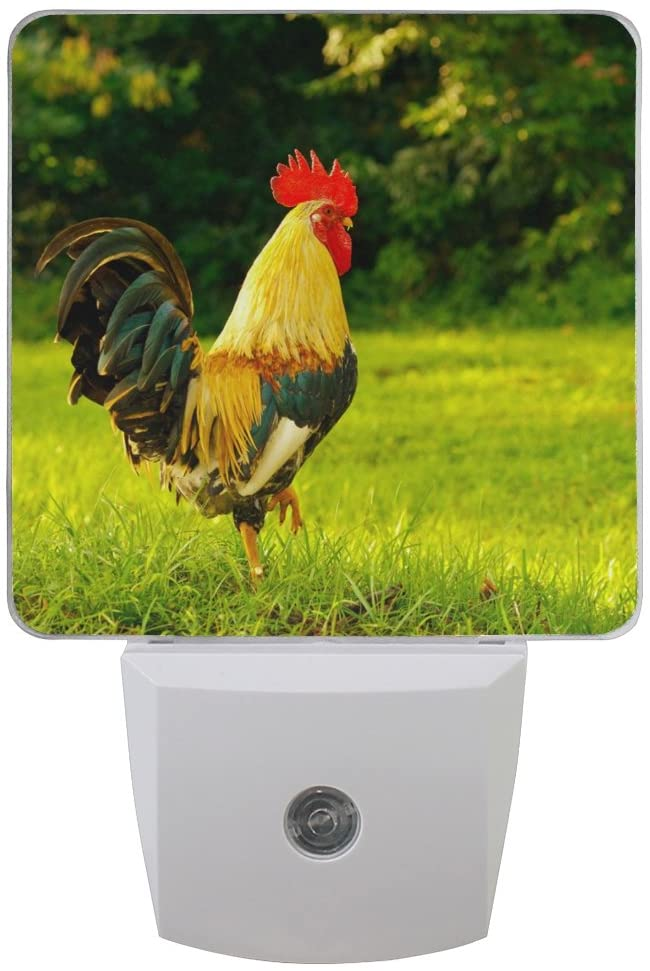 Naanle Set of 2 Rooster Cock Multicolor Gamecock Chicken Green Woodland Forest Rustic Picture Bright Sunny Day Auto Sensor LED Dusk to Dawn Night Light Plug in Indoor for Adults