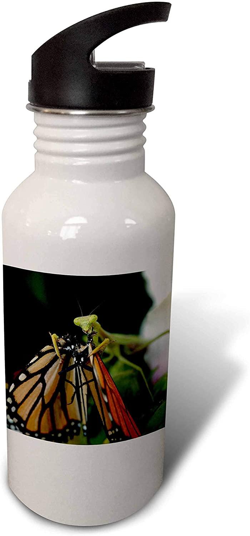 3dRose Photograph of a Praying Mantis Staring as it eats a Monarch. - Water Bottles (wb_327080_2)