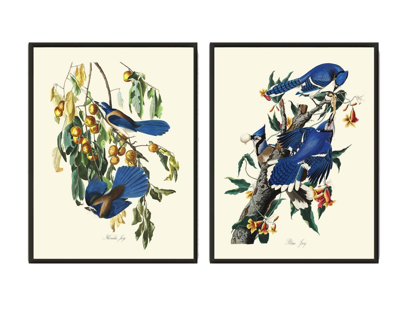 Audubon Blue Jay Bird Print Set of 2 Beautiful Home Room Decor Wall Art Unframed