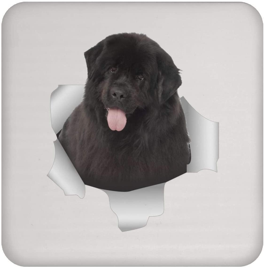 Funny Newfoundland Dog Brown Coaster For Men Women Dog Lovers