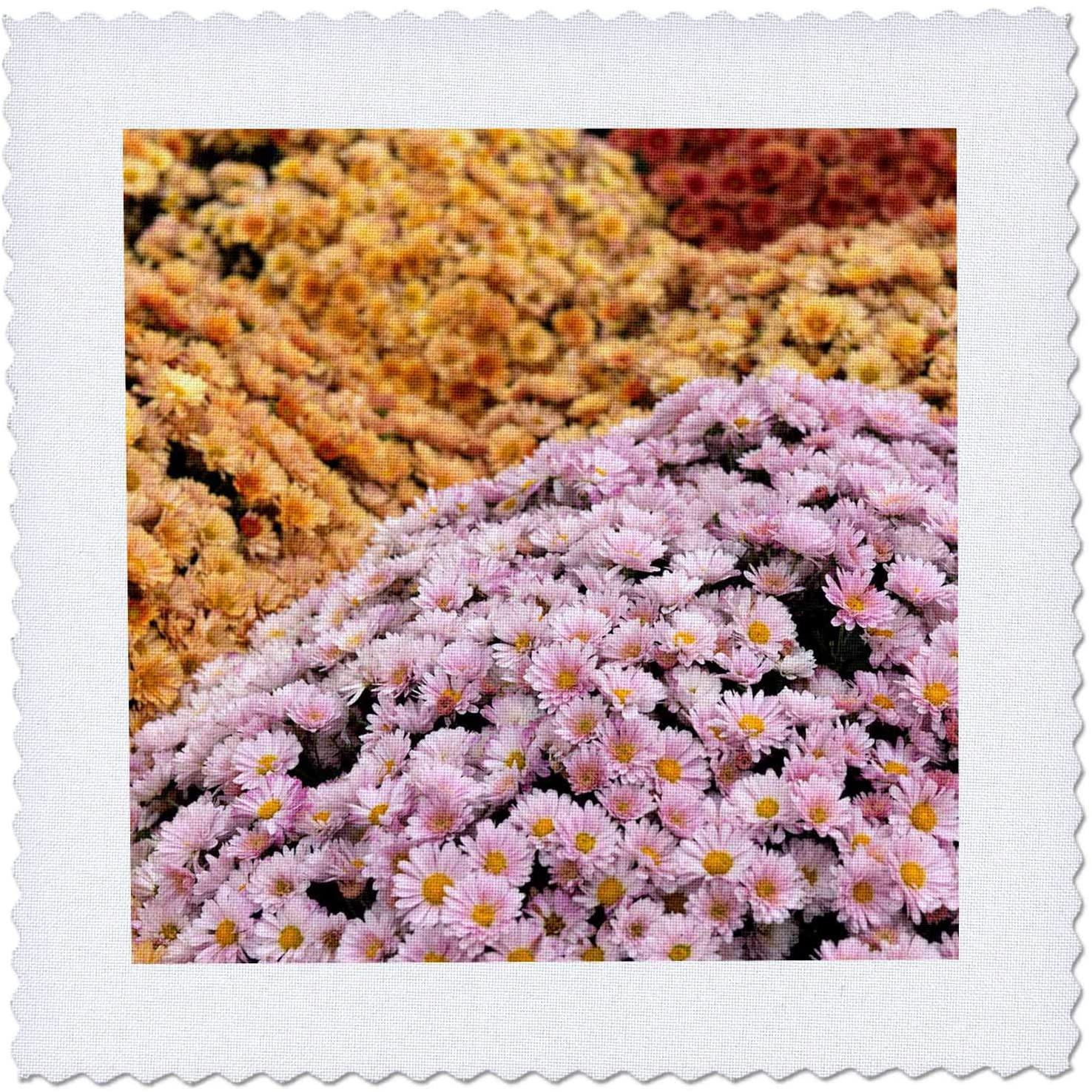 3dRose Hillocks of pink, beige Marguerite, Chrysanthemum segetum. - Quilt Squares (qs_327909_9)