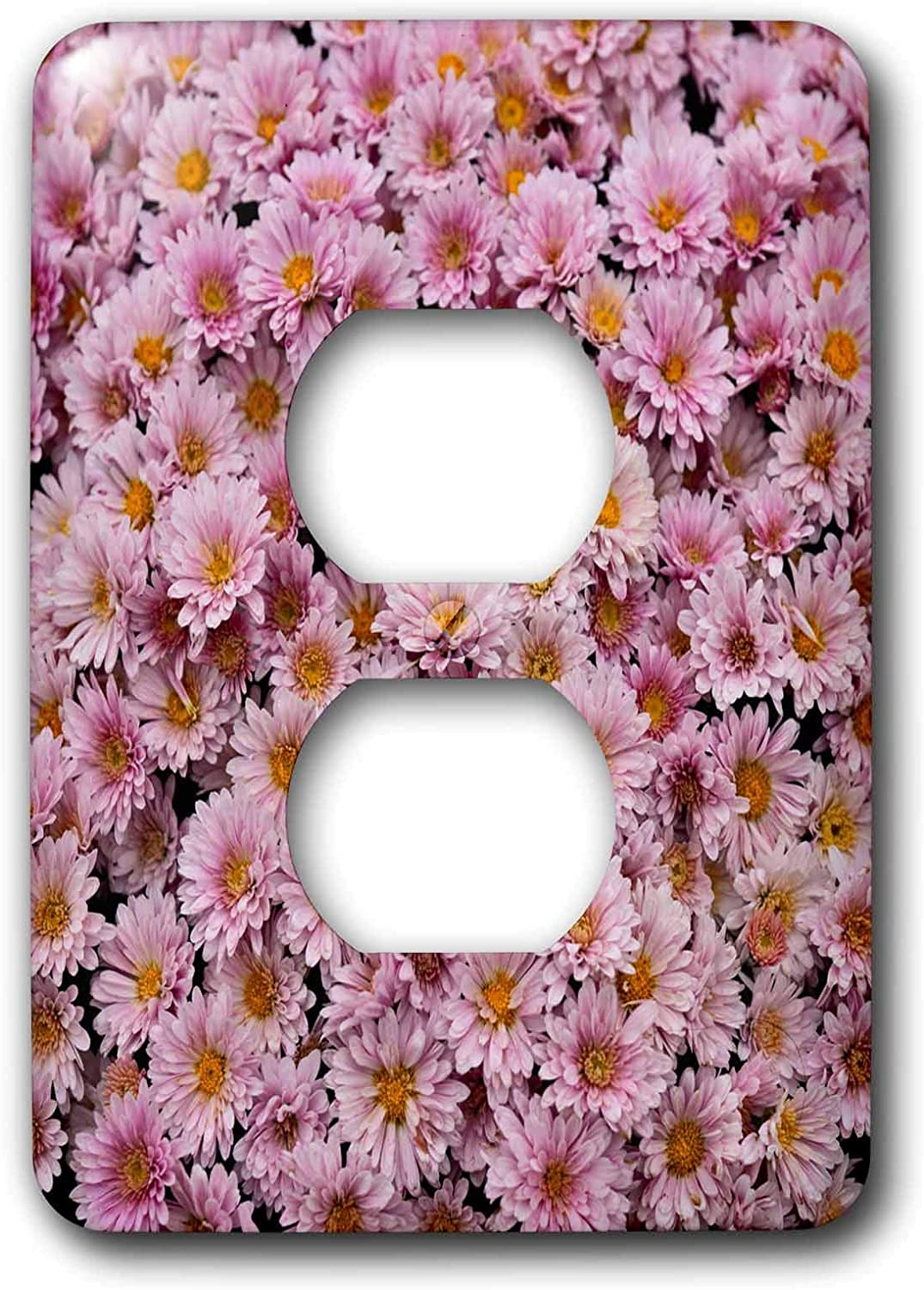 3dRose Pink Marguerite, Chrysanthemum segetum flowers. Natural. - Light Switch Covers (lsp_327901_6)