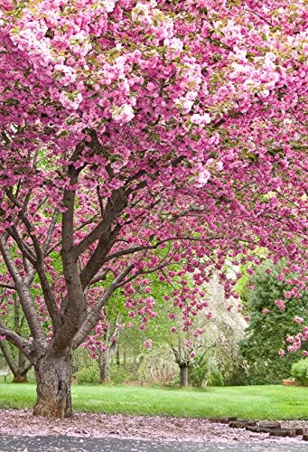 Baocicco Backdrop 8x10ft Cherry Blossom Vinyl Photo Background Flower Tree Natural Scenery Photo Booth Props Wedding Ceremony Valentine's Day Travel Vacation Backdrops for Park Journey Photography