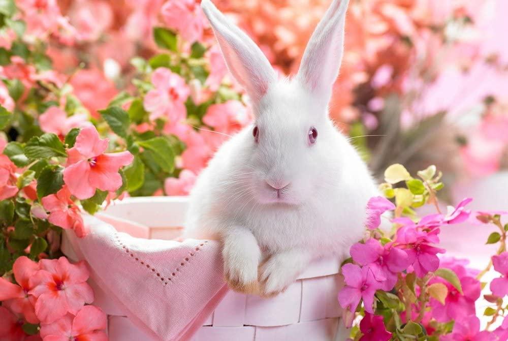 DZ.HAIKA Cute White Rabbit (N03) - Animal Picture Art Print Canvas Poster(16x24inch)