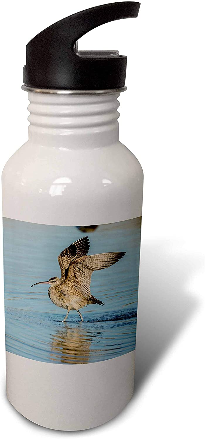 3dRose USA, California, San Luis Obispo. Whimbrel Wing Stretch in. - Water Bottles (wb_331074_2)