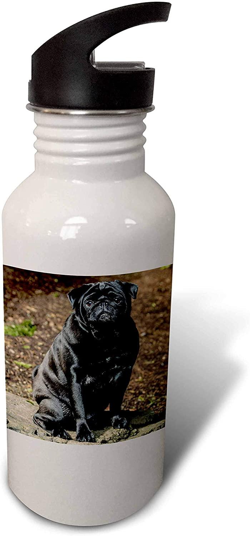 3dRose Redmond, WA, USA. Portrait of a Black Pug. - Water Bottles (wb_332651_2)