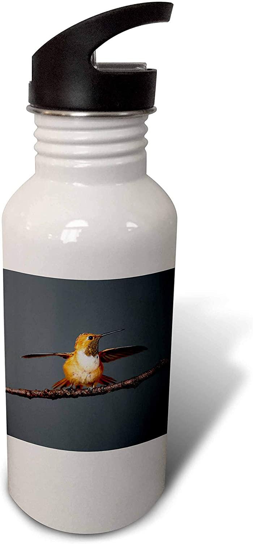 3dRose Rufous Hummingbird, Selasphorus Rufus. - Water Bottles (wb_332216_2)