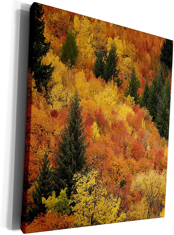 3dRose Autumn tree, Arrowtown, near Queenstown, Otago, S. - Museum Grade Canvas Wrap (cw_329647_1)
