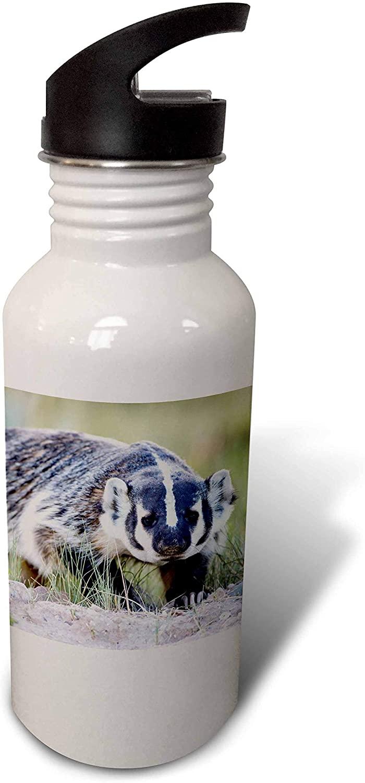 3dRose WY, Sublette County. Badger Walking in Grassland Showing Long. - Water Bottles (wb_333194_2)