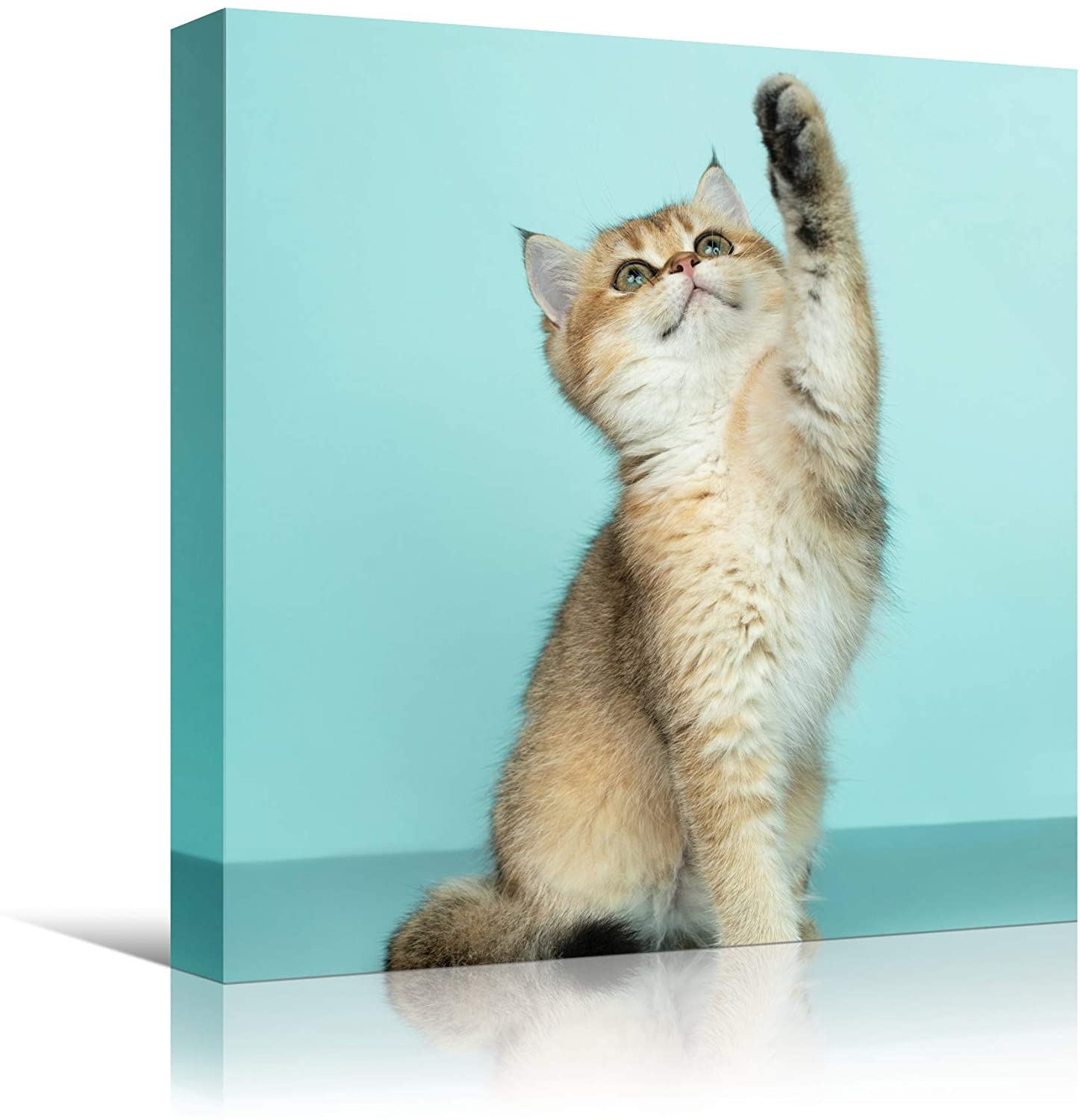 bestdeal depot Cat XX Animals Cat Chic Multicolor Photography Urban Wall Art Prints for Living Room,Bedroom Ready to Hang - 16x16 inches