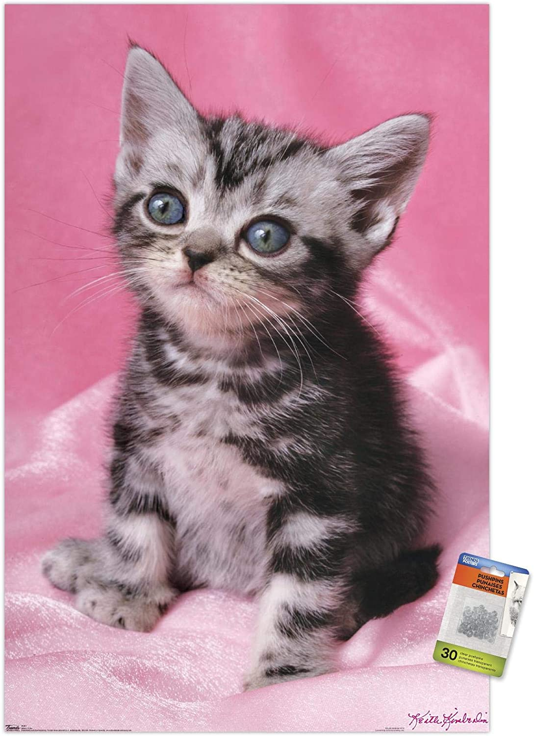 Keith Kimberlin - Kitten - Cute Wall Poster with Push Pins