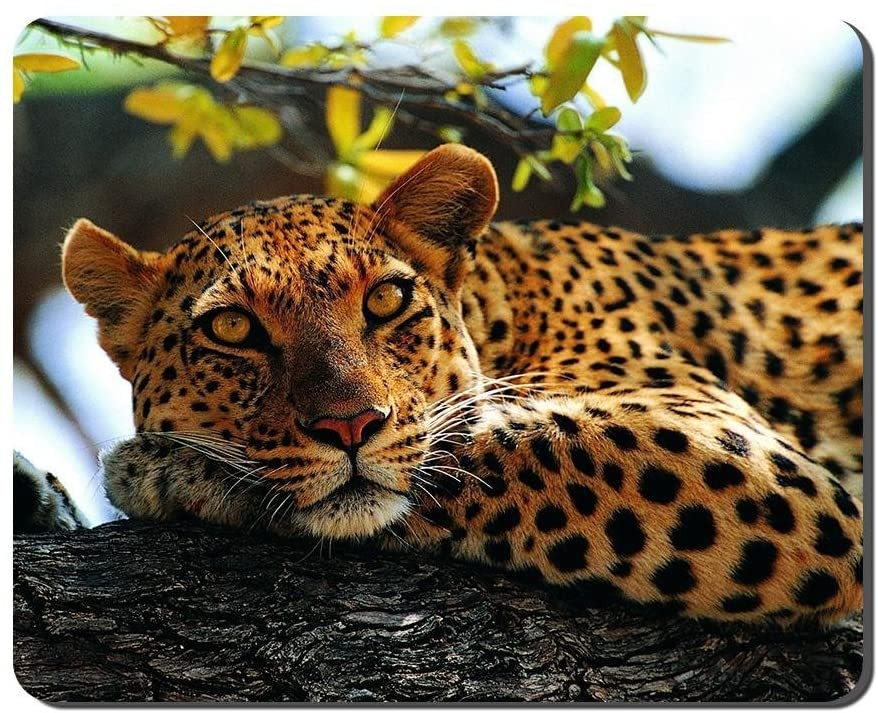 Animals Leopard Tree Animal Picture Game Office Mouse Pad (8.2x10.2inches)