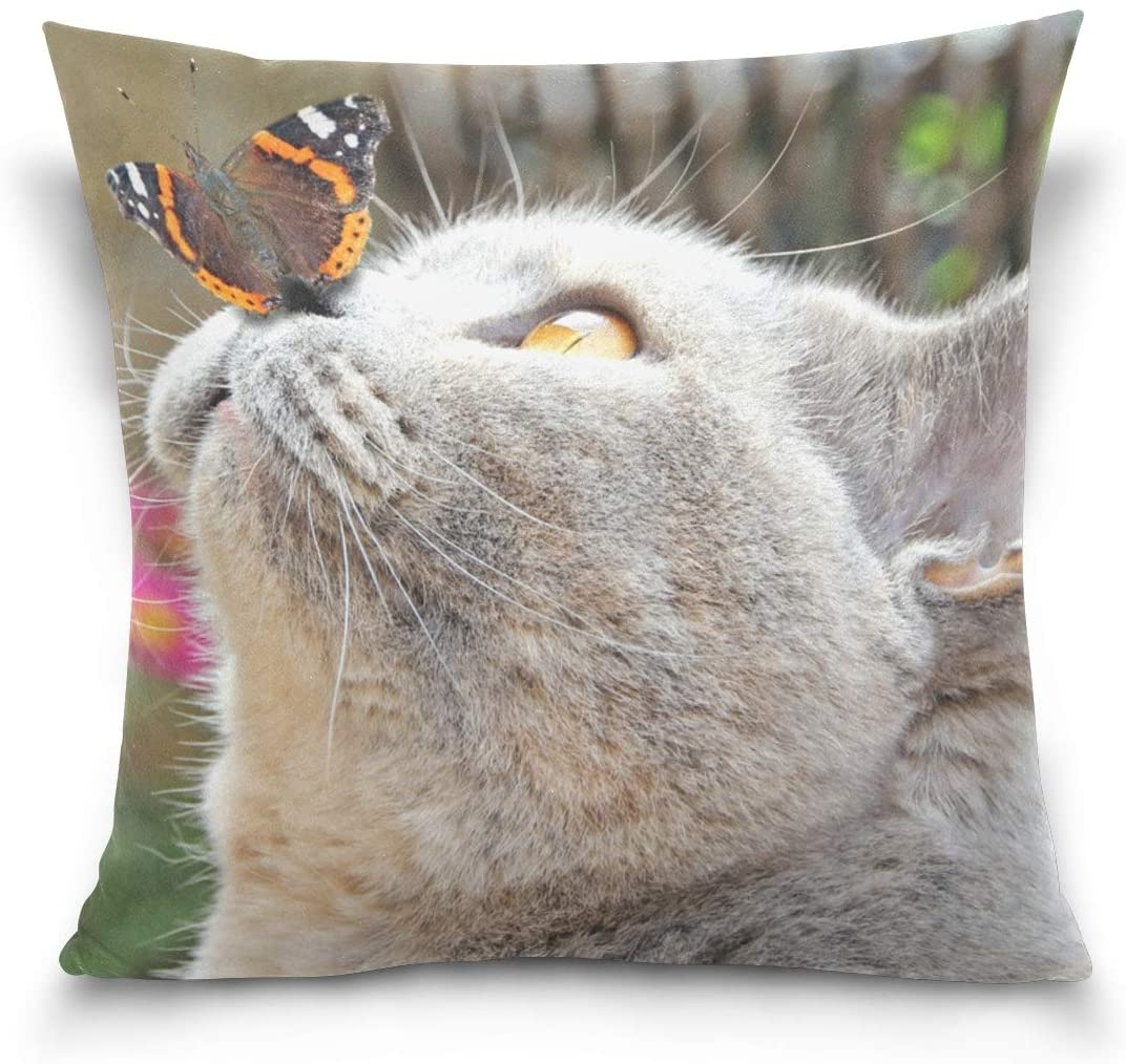 Mohado Cute British Shorthair Cat and Butterfly Square Decorative Throw Pillow Cover Case Cushion Cover for Sofa Bedroom Couch Car Double-Sided Printing 20 x 20 inch