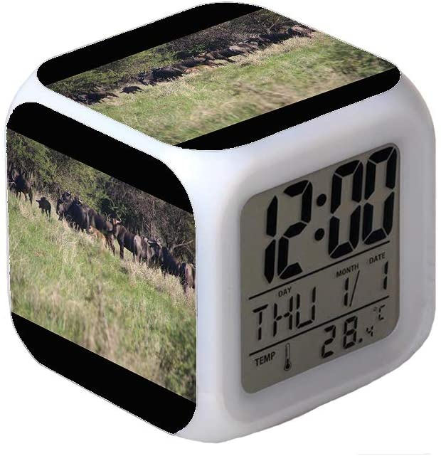 7Colors LED Changing Digital Alarm Clock Desk Thermometer Night Glowing Cube LCD Clock Home Decor Photo of Buffalos in The Field