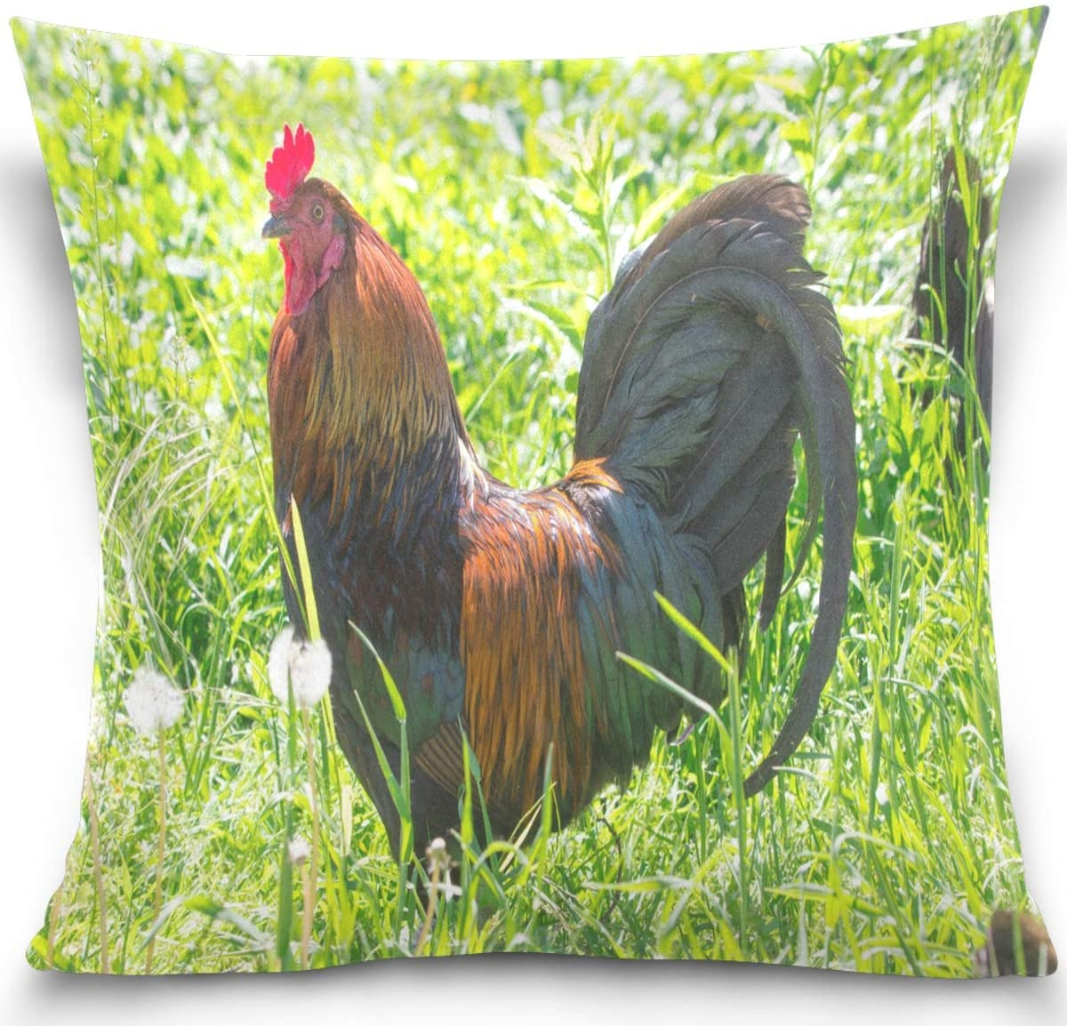 Olinyou Rooster Grass Animal Farm Cock Throw Pillow Covers Square Soft Cotton Velvet Decorative Pillowcase Cushion Cover 20 x 20 Inch