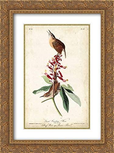 Great Carolina Wren 18x24 Gold Ornate Frame and Double Matted Art Print by John James Audubon