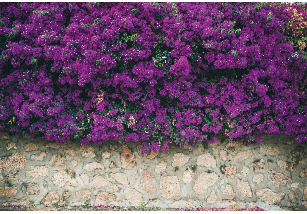 LFEEY 10x8ft Vinyl Summer Street Flowers Backdrops for Photography Stone Wall Covered with Purple Blooming Bougainvillea Flowers Wedding Photography Background Baby Girls Adults Portrait Studio Props