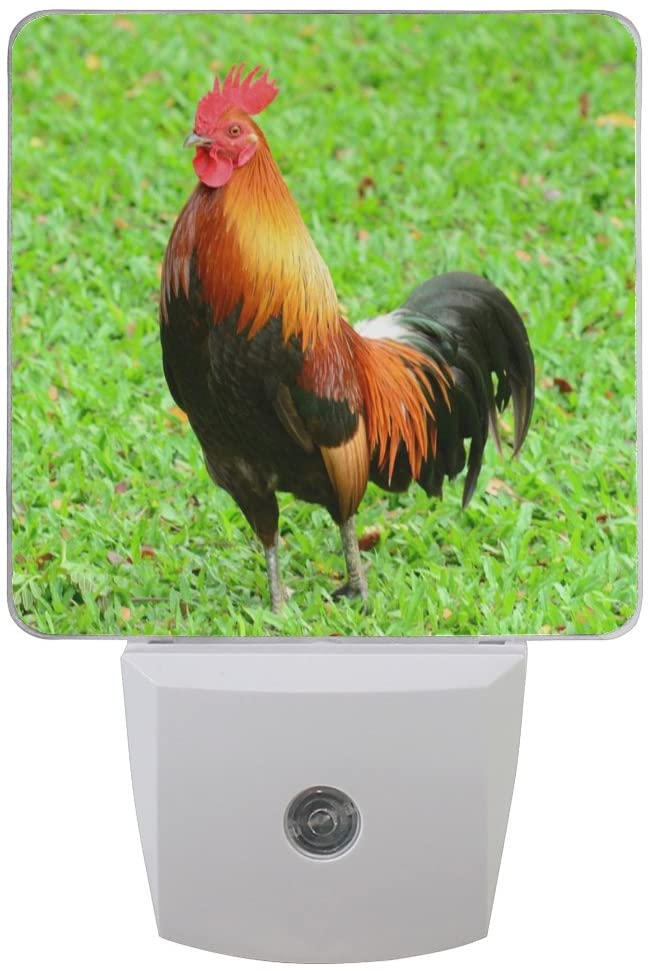Naanle Set of 2 Brown Rooster Multicolor Chicken Gamecock Cock Bantam On Green Grass Auto Sensor LED Dusk to Dawn Night Light Plug in Indoor for Adults