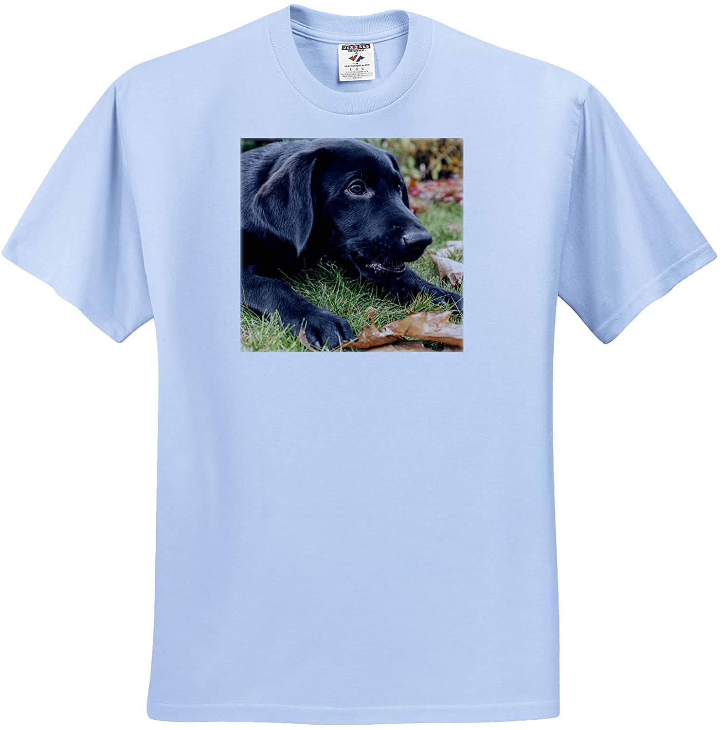 3dRose Danita Delimont - Animals - Portrait of a Three Month Old Black Labrador Retriever Puppy - Youth Light-Blue-T-Shirt Small(6-8) (ts_332862_60)