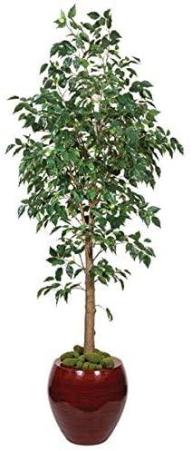 Benjamina Ficus Tree on Synthetic Resin Trunks Signature Foliage 7 to 8 Feet