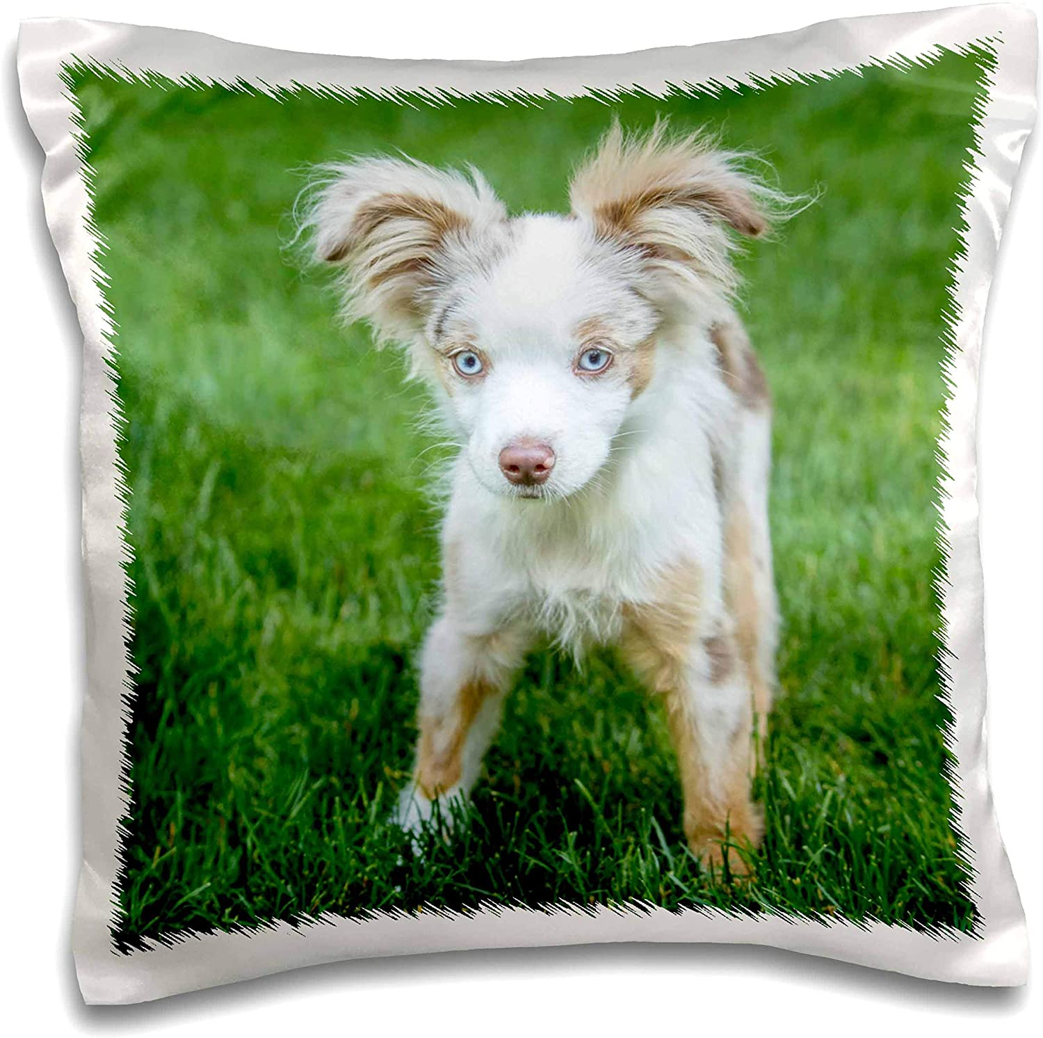 3dRose Mini Australian Shepherd puppy playing in his yard - Pillow Cases (pc_332699_1)