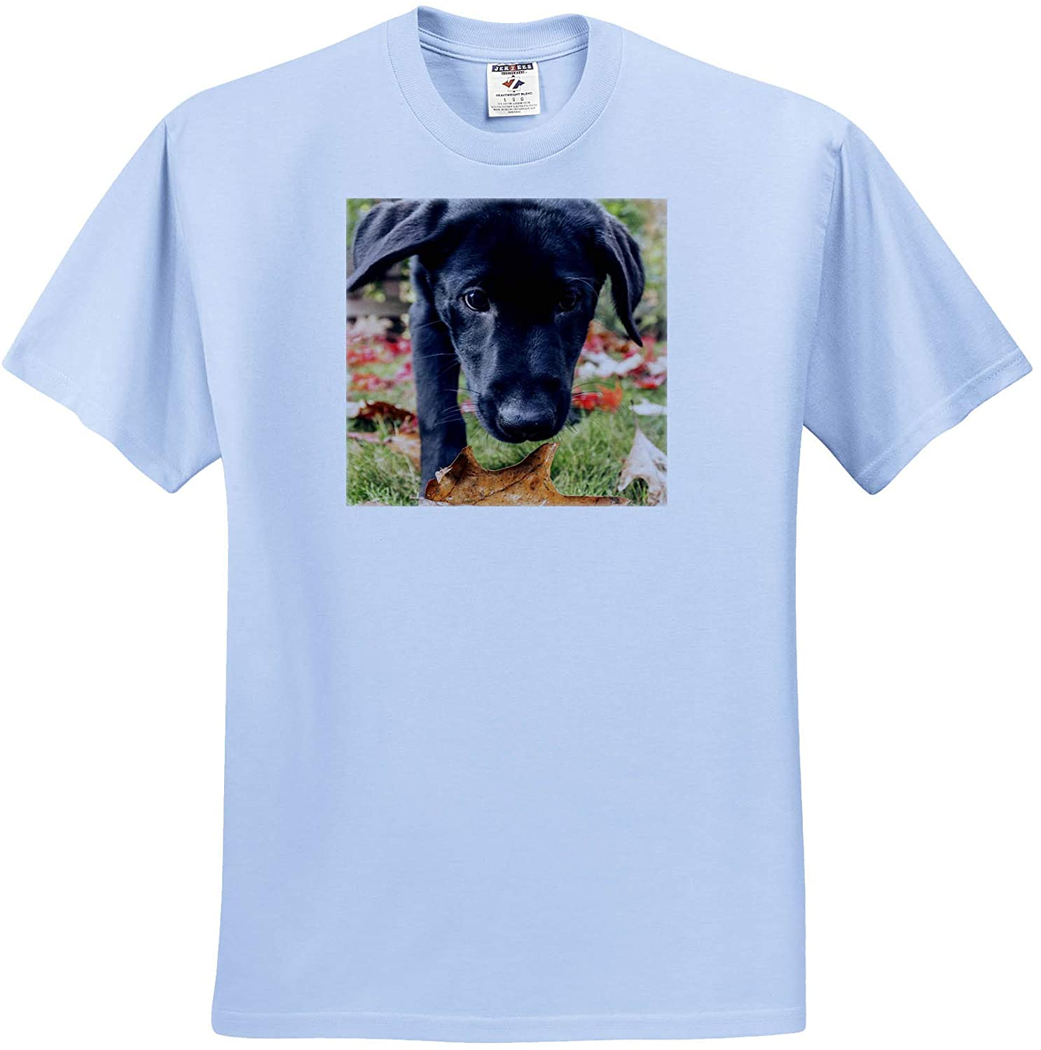 3dRose Portrait of a Three Month Old Black Labrador Retriever Puppy. - T-Shirts (ts_332736)