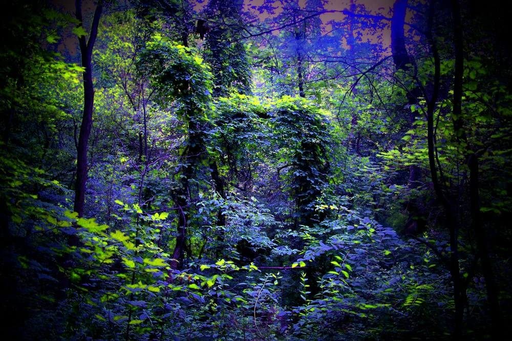 Art Print on Canvas Wall Decor Poster (Night Forest Nature) Size:24x36inch