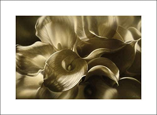 20x15 Bogle, Collin Art Print by Museum Prints Titled Golden Lilies