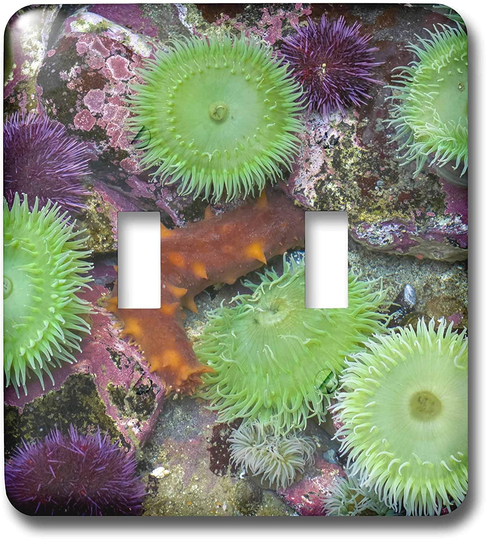 3dRose USA, Oregon, Newport.Anemones and sea slug in tide pool. - Light Switch Covers (lsp_331908_2)