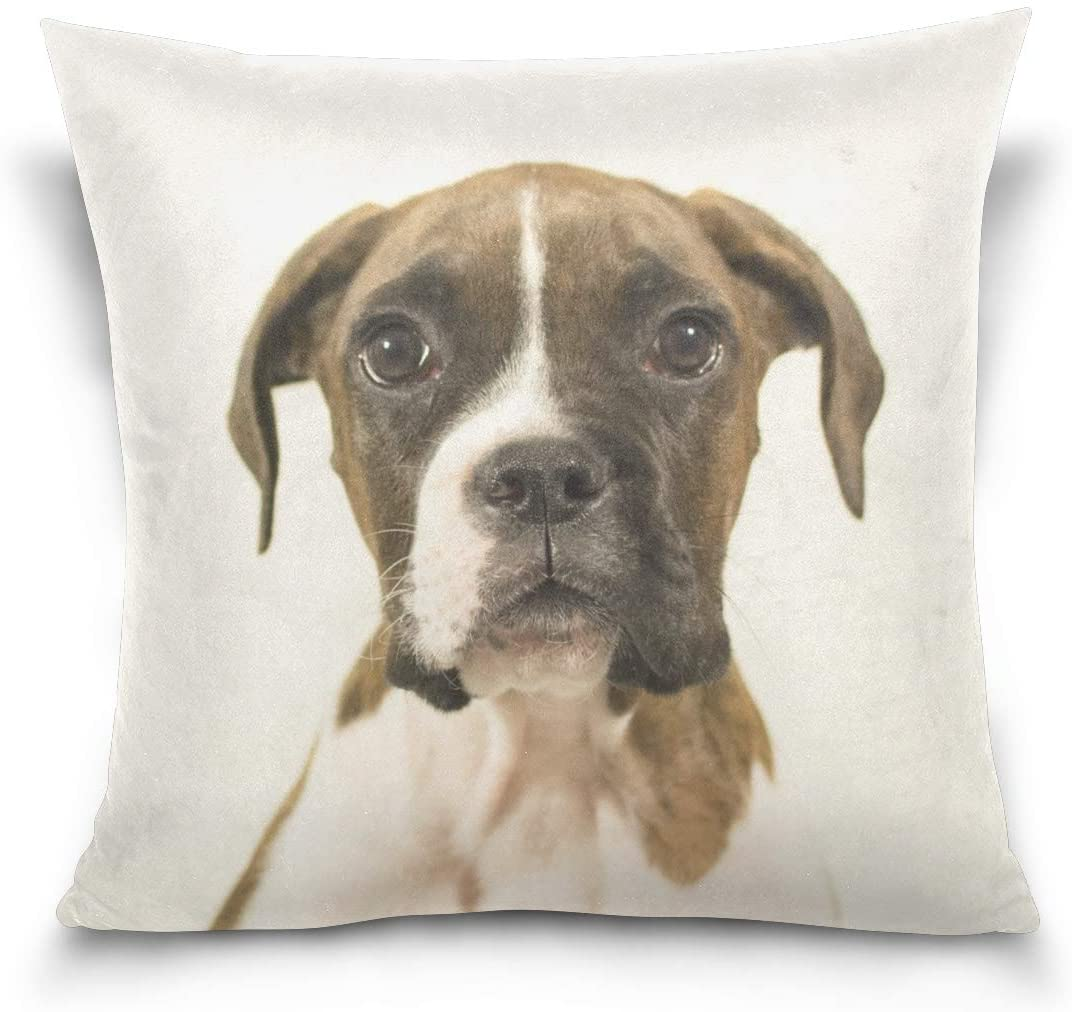 Holisaky Cute Boxer Dog Puppy Decorative Square Throw Pillow Covers Cases Home Décor for Bed Sofa Couch Car 20 x 20 inch