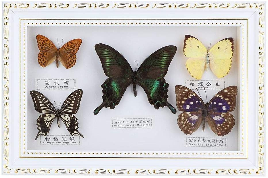 Yasashi Exquisite Butterflies Insect Specimen Picture Frame Craft Display Photo Frame Birthday Gift Home Decor Ornament(White Frame)