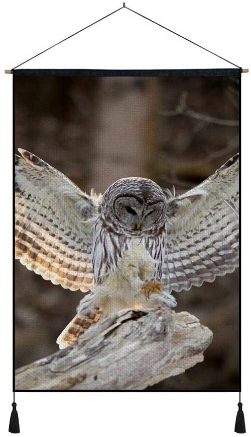 DZ.HAIKA Owl (N13) - Animal Picture Art Print Cotton Linen Home Wall Decor Hanging Posters(20x30inch)