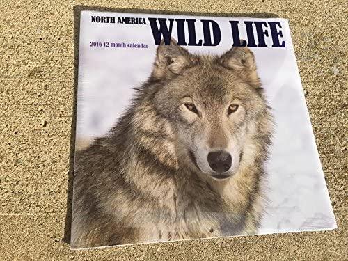 North America Wild Life 2016 12 Month Calendar